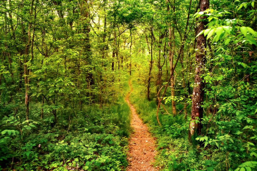 Devil's Backbone Wilderness, Ozark County Missouri