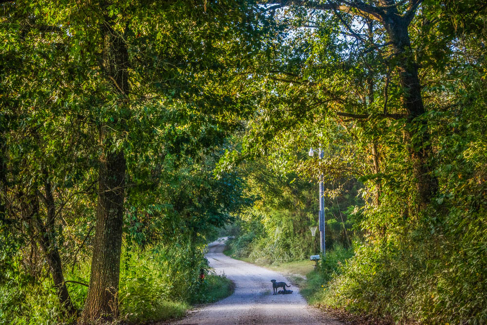 Ozark County Country Road
