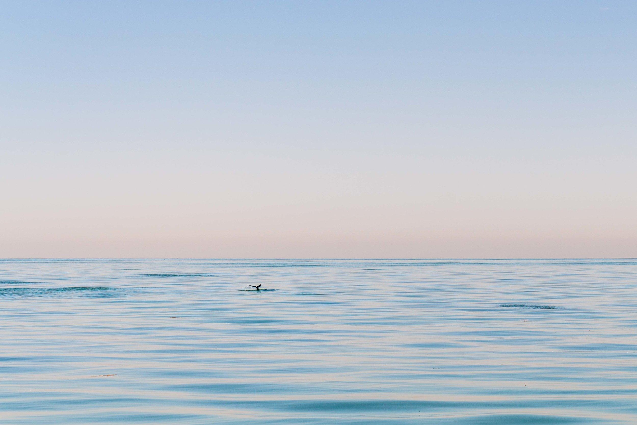 dolphin-1.jpg