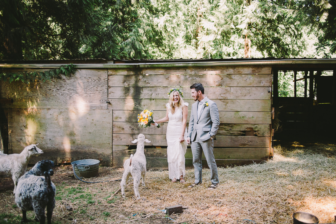 A wedding photograph interrupted by a hungry goat!
