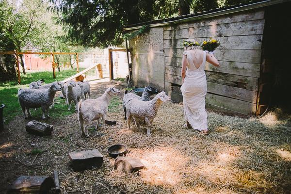 Five goats peer at a bride and her bouquet - Sahara Coleman - Professional Wedding Photographer, Destination Photographer 2014 Seattle Washington
