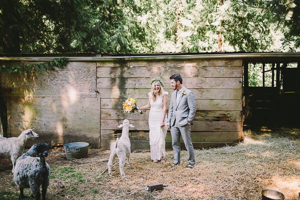 A goat interrupts a bride and grooms pose - Sahara Coleman - Professional Wedding Photographer, Destination Photographer 2014 Seattle Washington
