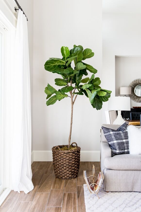 A fiddle leaf fig tree – the current must-have house plant, is a great addition too.