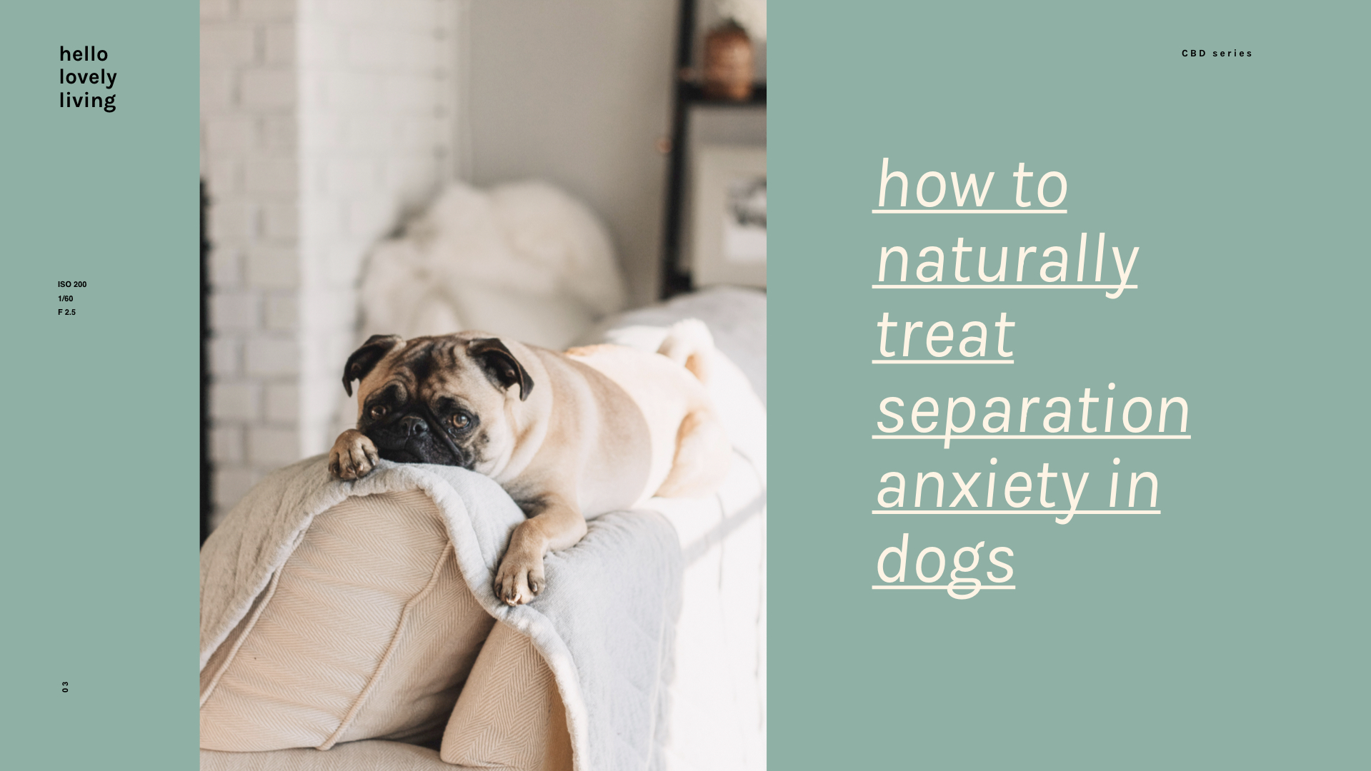 hellolovelyliving.com | CBD Series Part 3 | Your Dog Can Benefit From CBD Oil Too? CBD for pets: How To Naturally Treat Separation Anxiety In Dogs