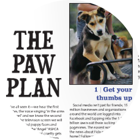 THE PAW PLAN
