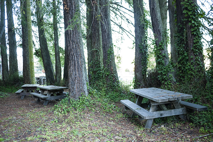 Redwood Picnic Grove near the cheese shop.