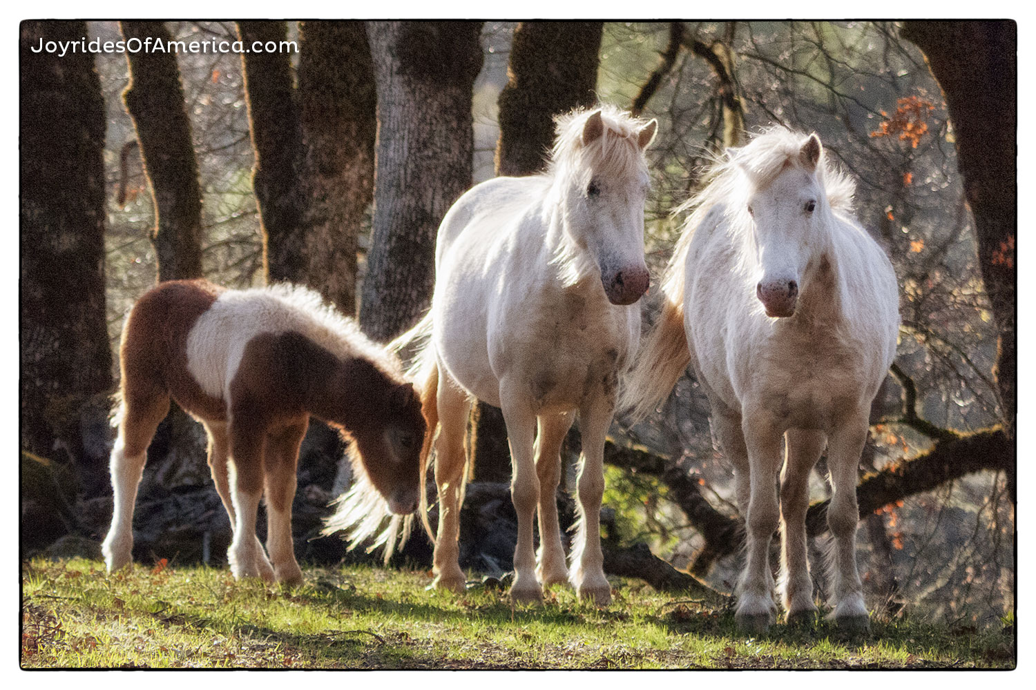 A magical place, with magical beasts.Wild horses!