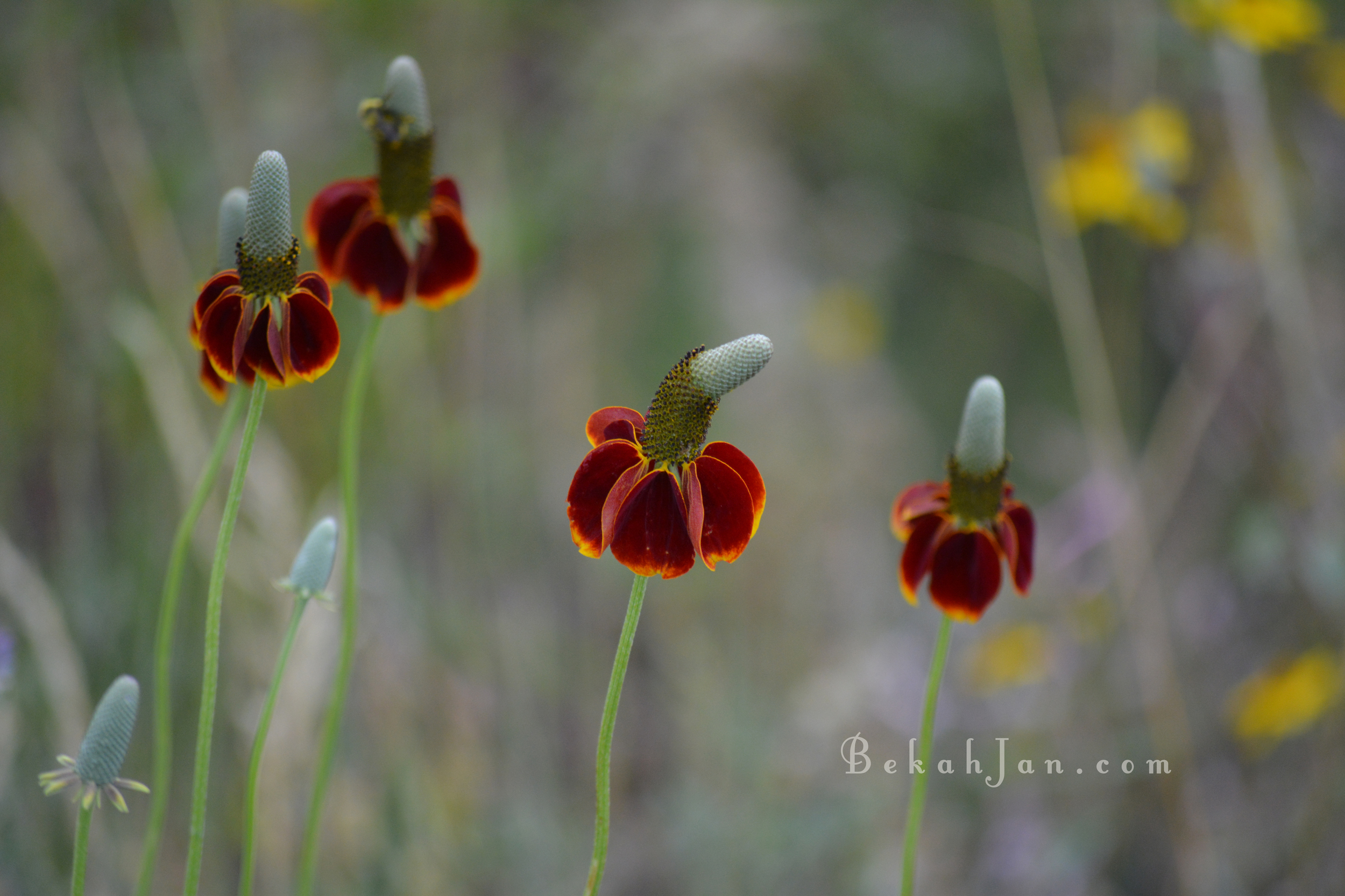 Flower W.jpg