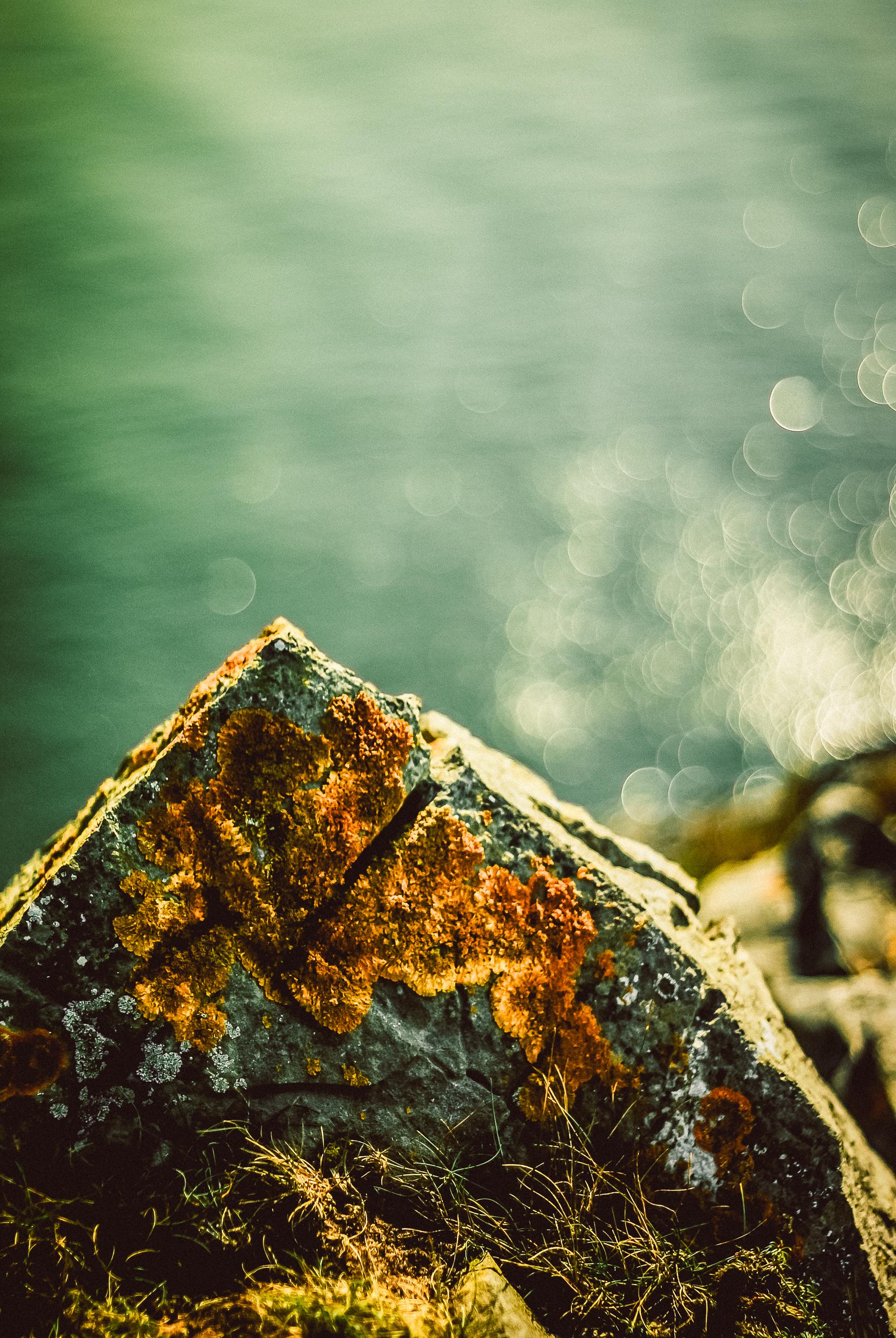 Rock, Tenby.  Nikon D60 | 50mm | F1.8 - 1/4000th - iso100