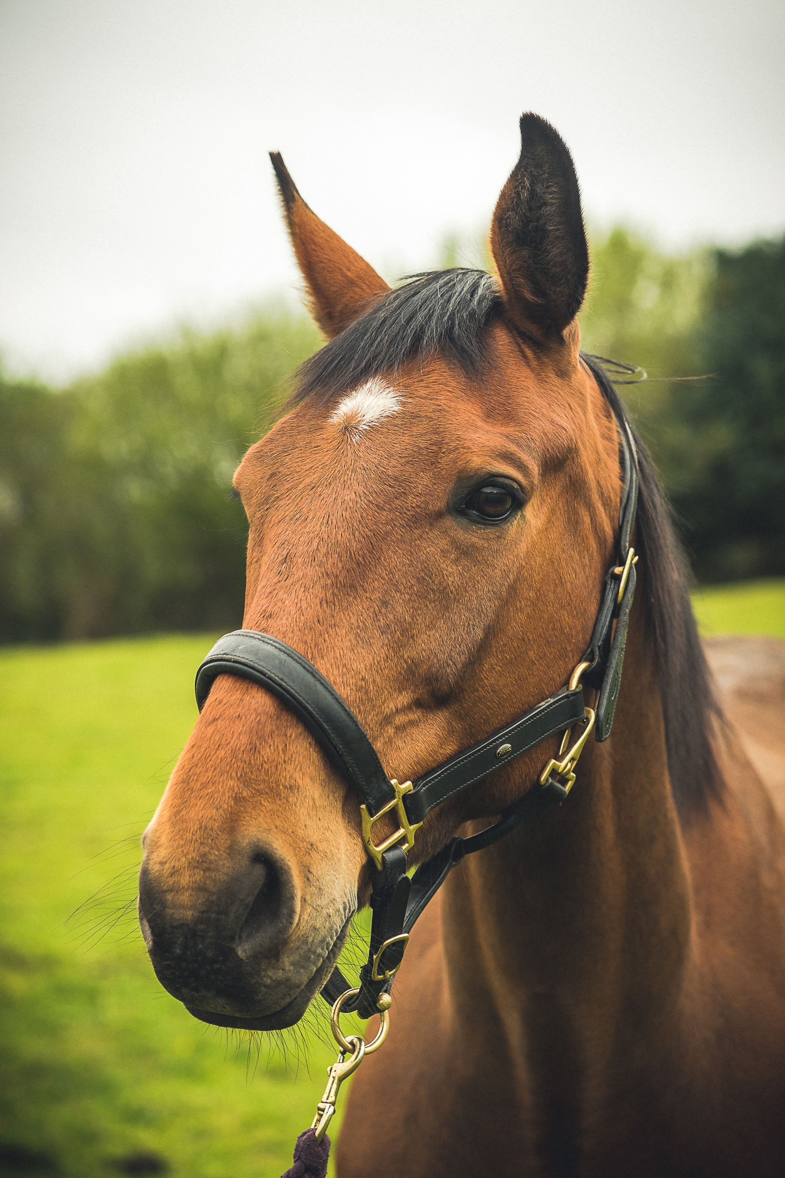 3rd_may_2014_horse_photography-22.jpg