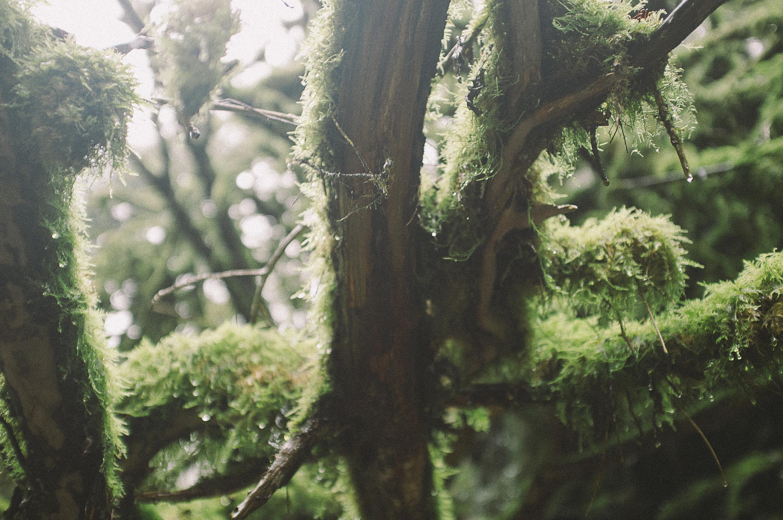 Fuji X100 Waterfall Photography-2.jpg
