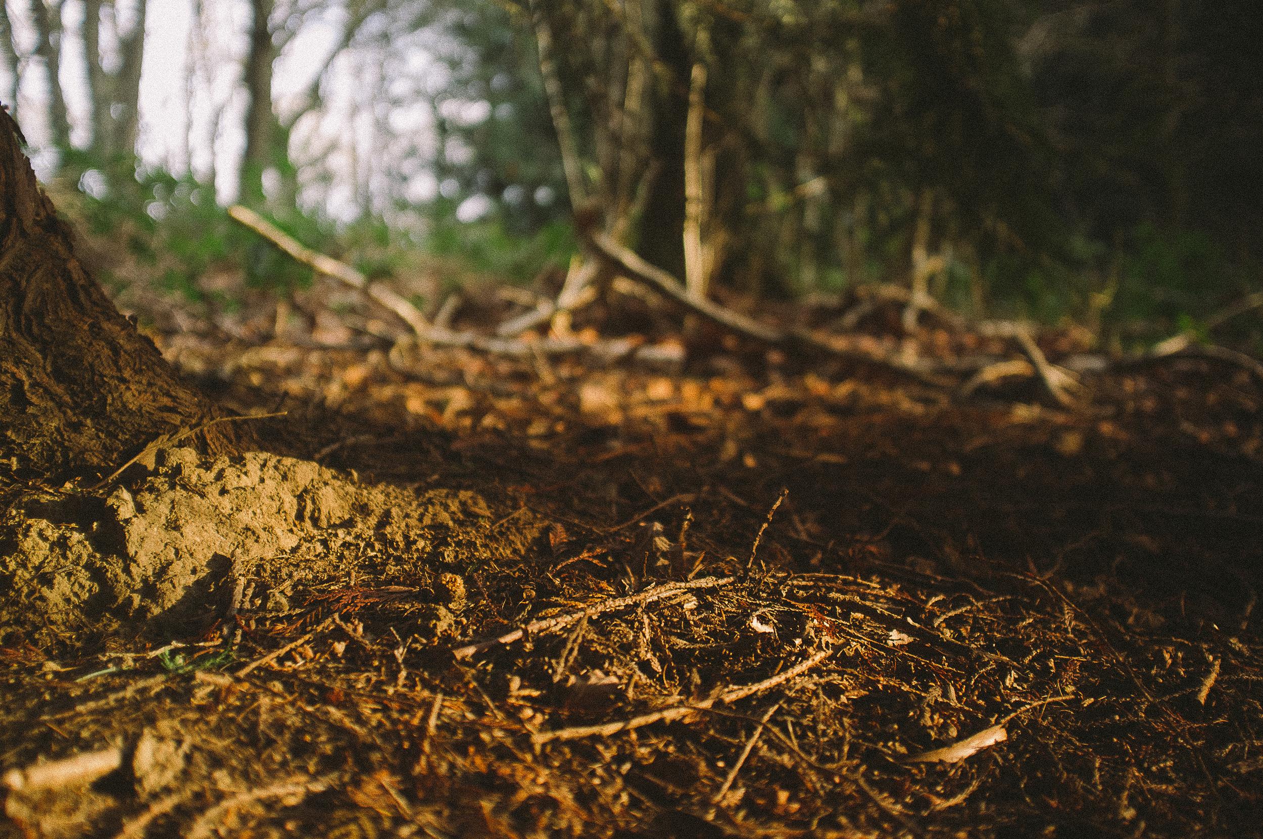 fuji x100 woods-1-10.jpg
