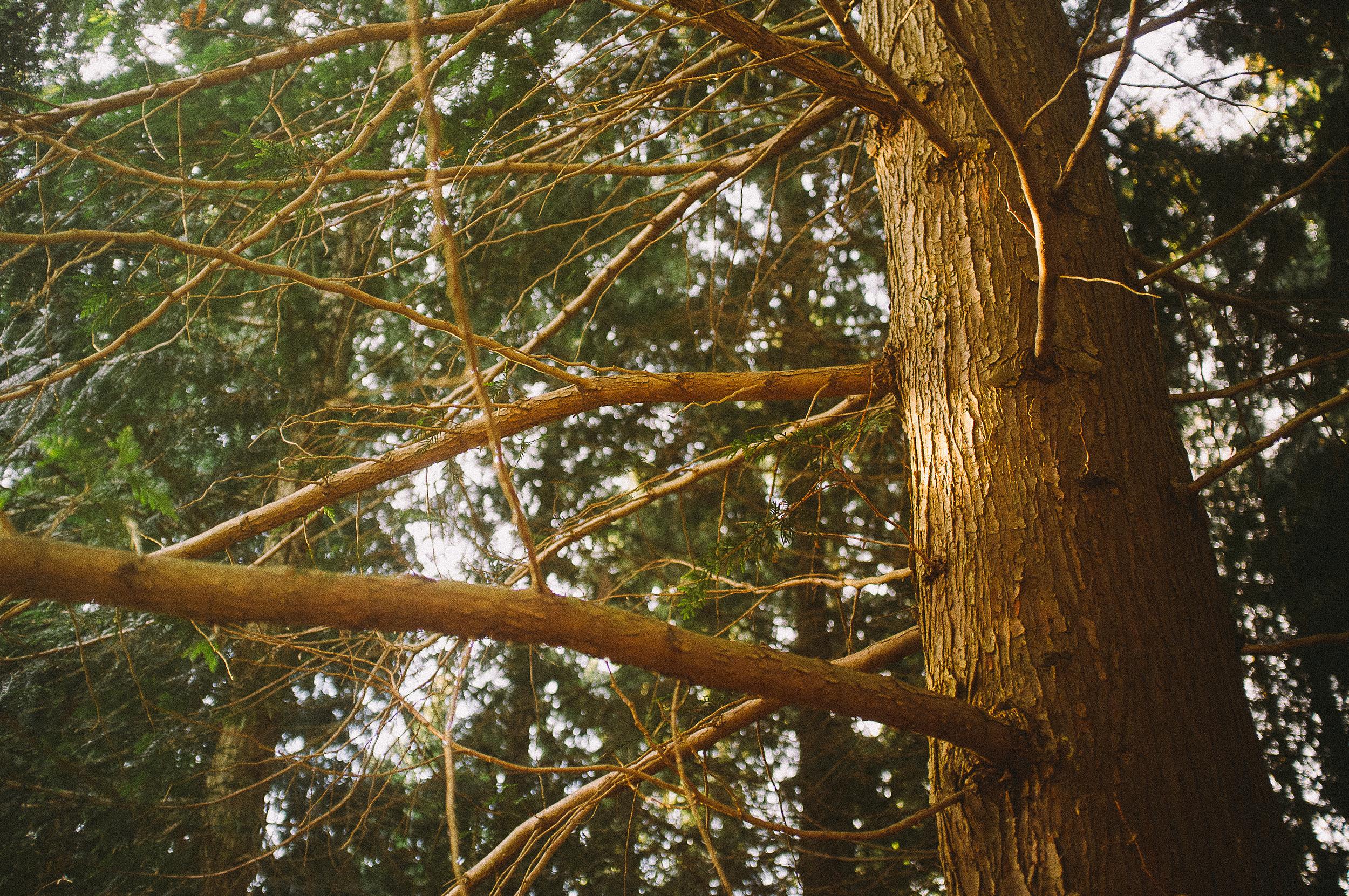 fuji x100 woods-1-12.jpg