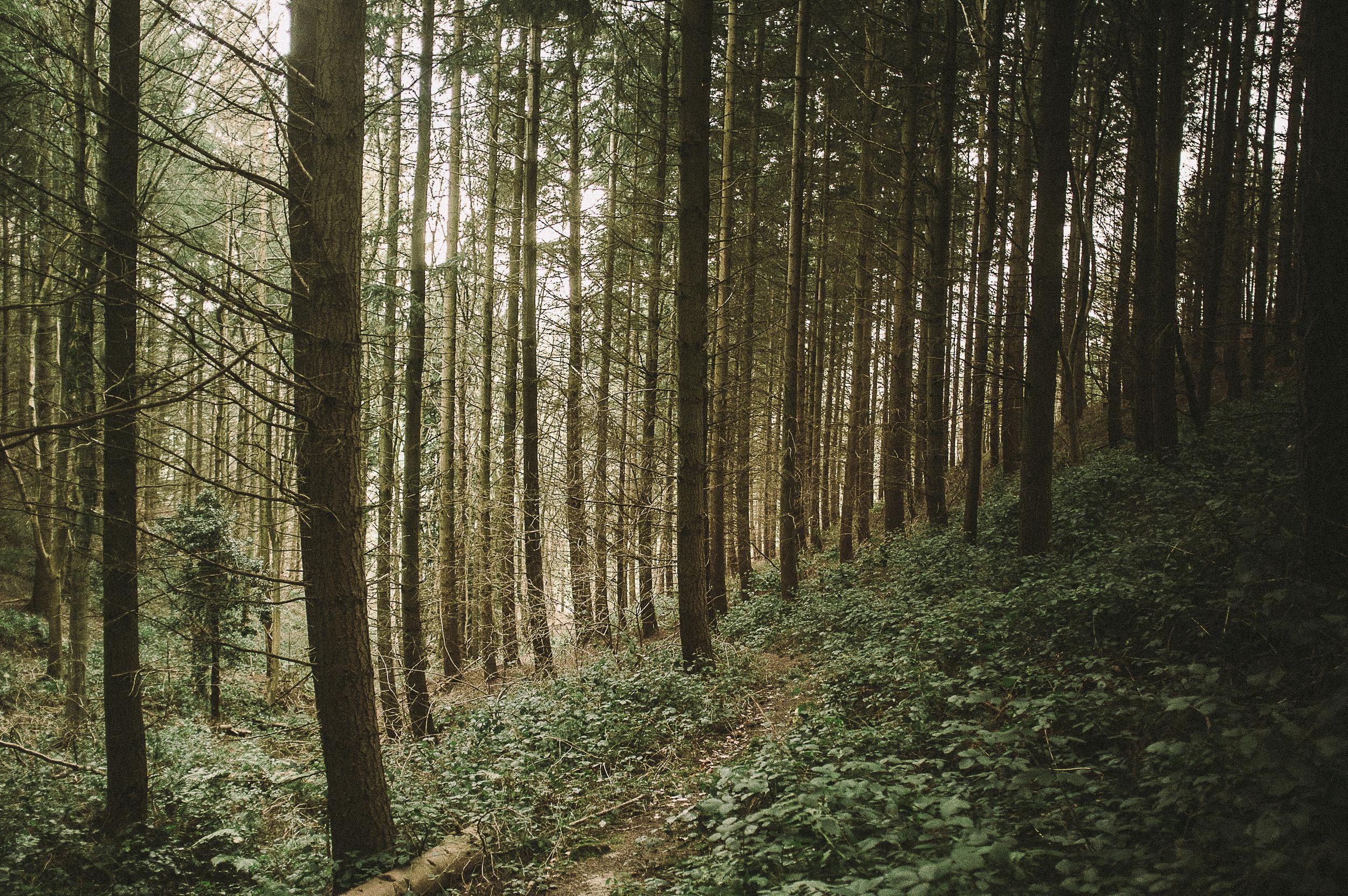 fuji x100 woods-1-15.jpg
