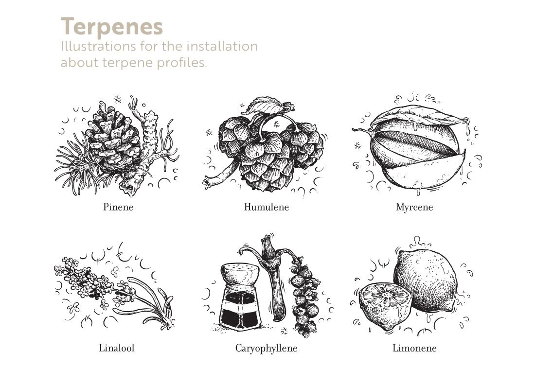 terpenes.jpg