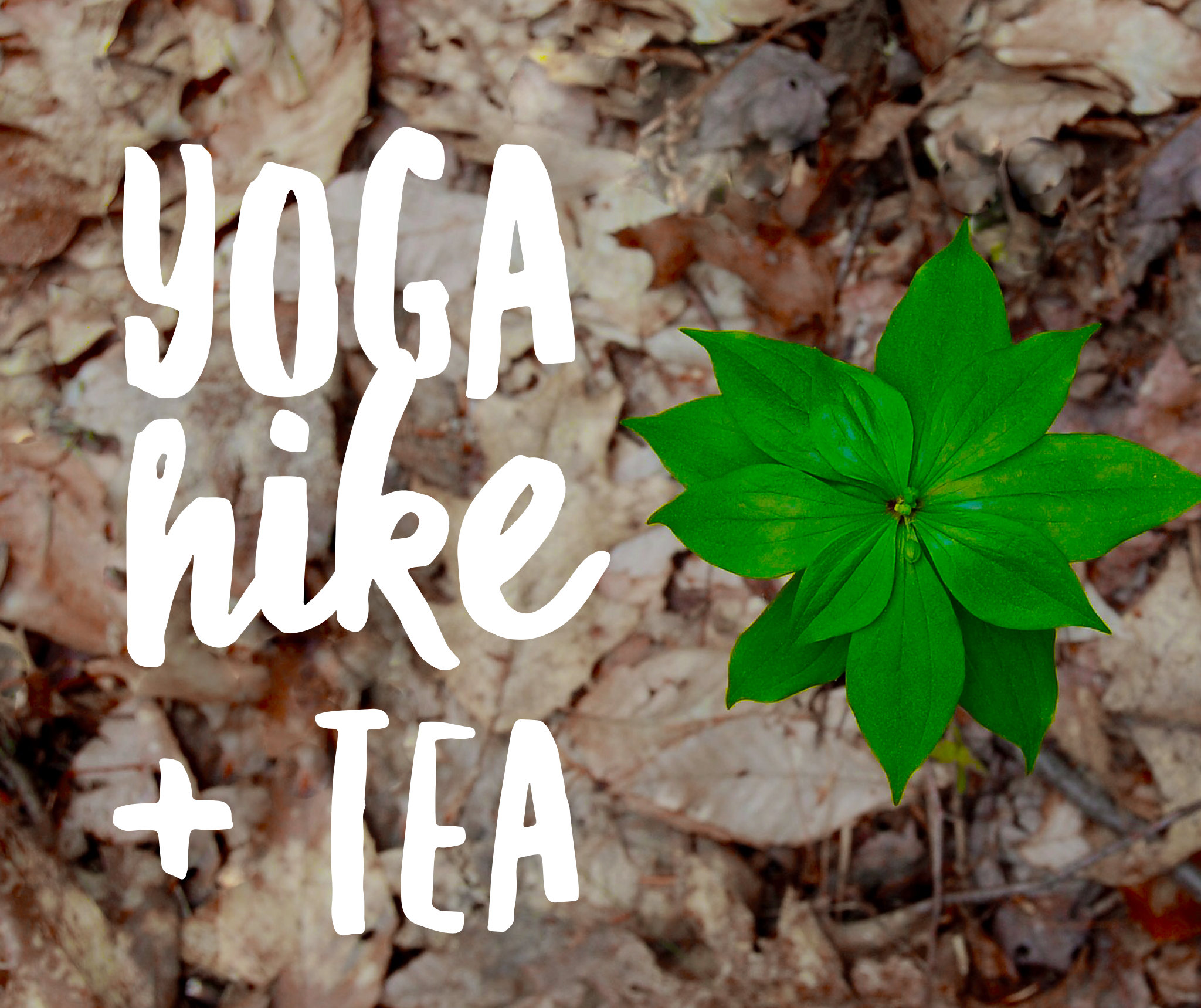 Yoga Hike and Tea at Bushy Run Park