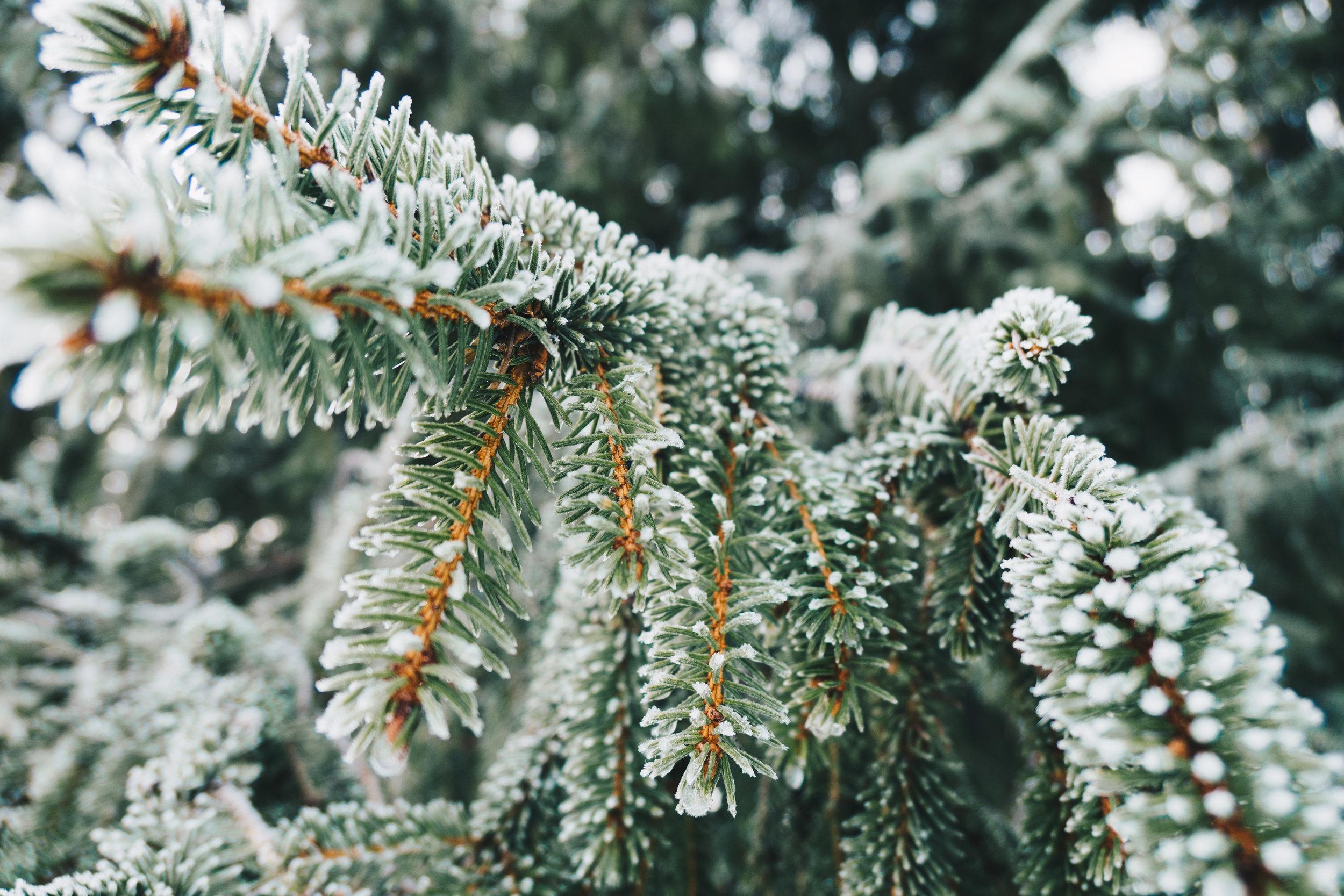 Winter Teaching Hibernation