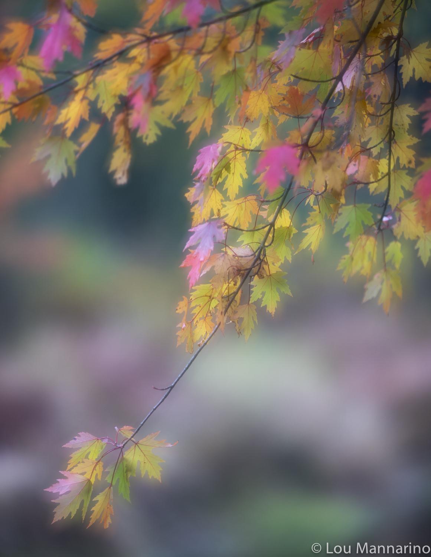20121003_Mannarino_0039.jpg