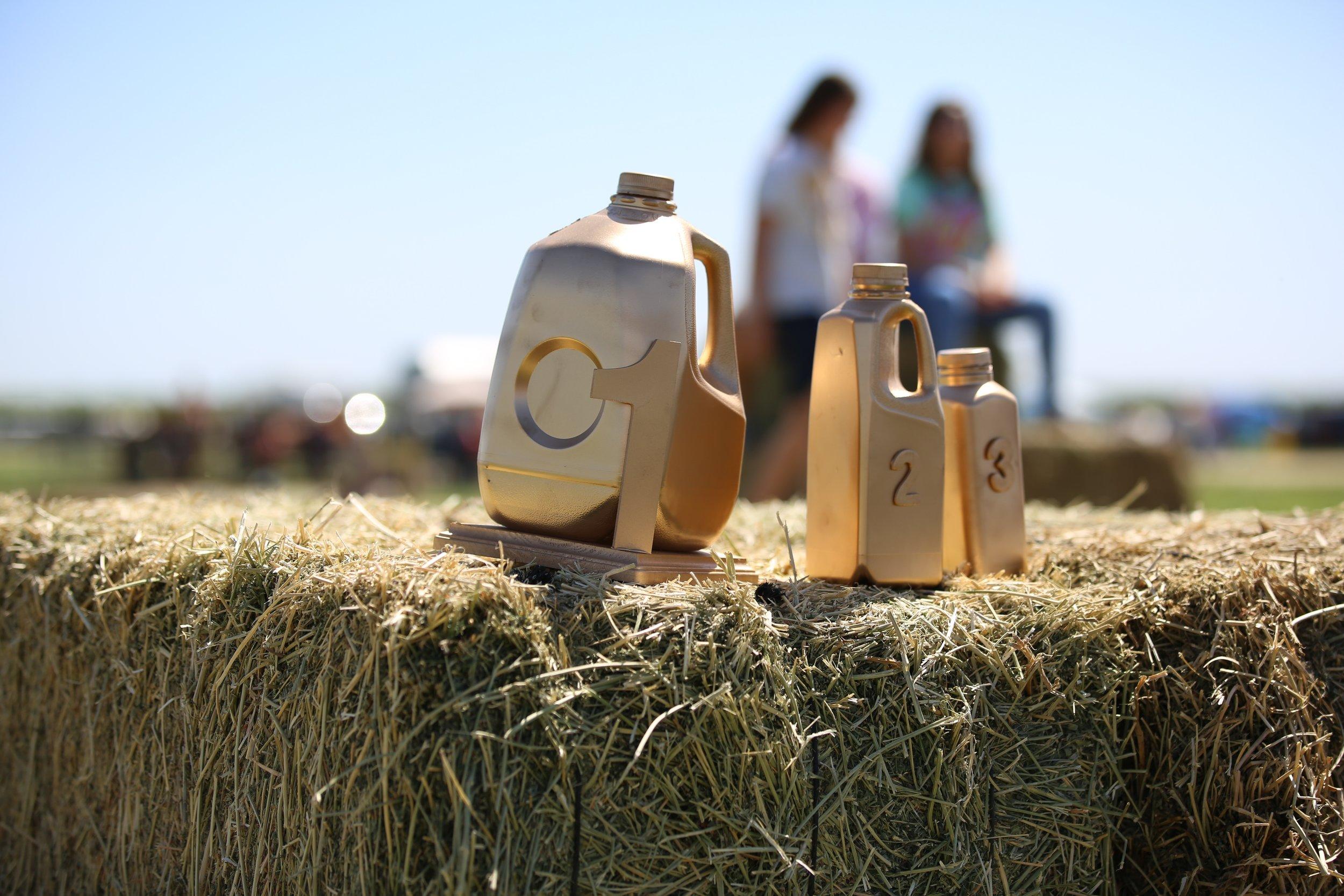 CWTC at Organic Pastures