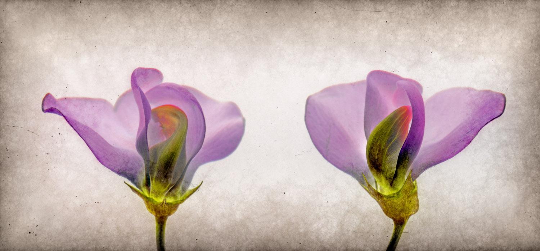 Flower0036e.jpg