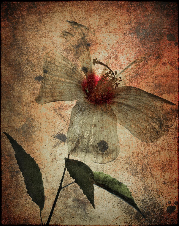 Flower0064d.jpg