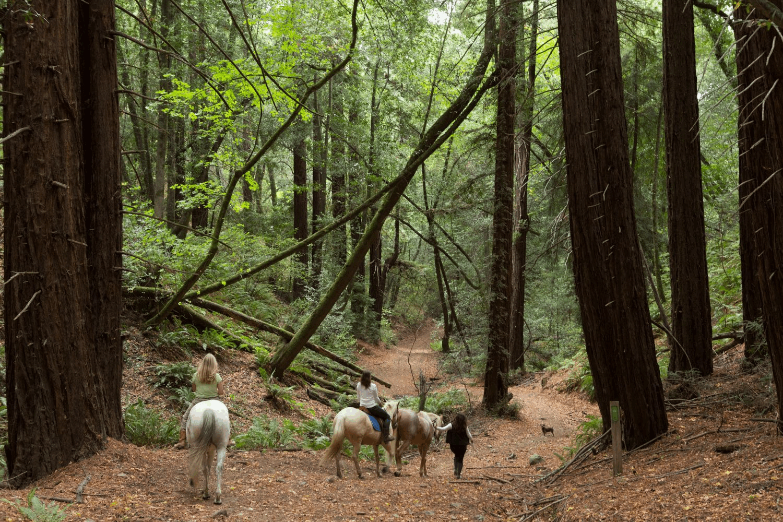 Fairyland Sierra.png