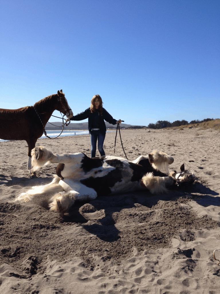 Horse getting a mud bath & salt scrub