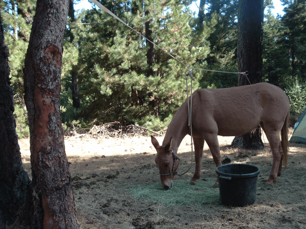 mule camping oakland hills.png