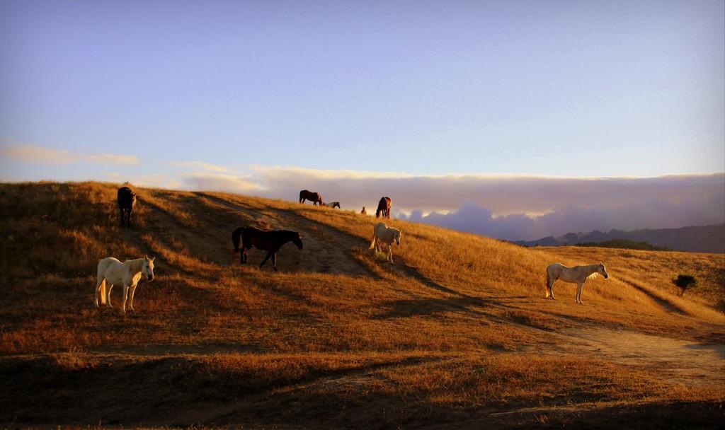"""Reena Rosskopf's  """"Summer Evening on Horse Hill"""""""