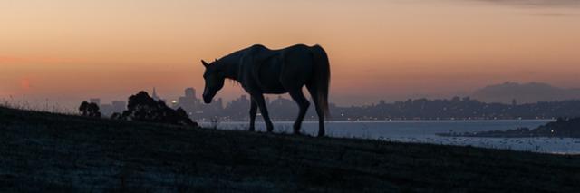 image 7 sunset.jpeg