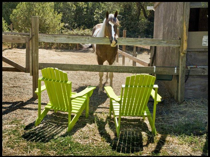Summer chairs.jpg