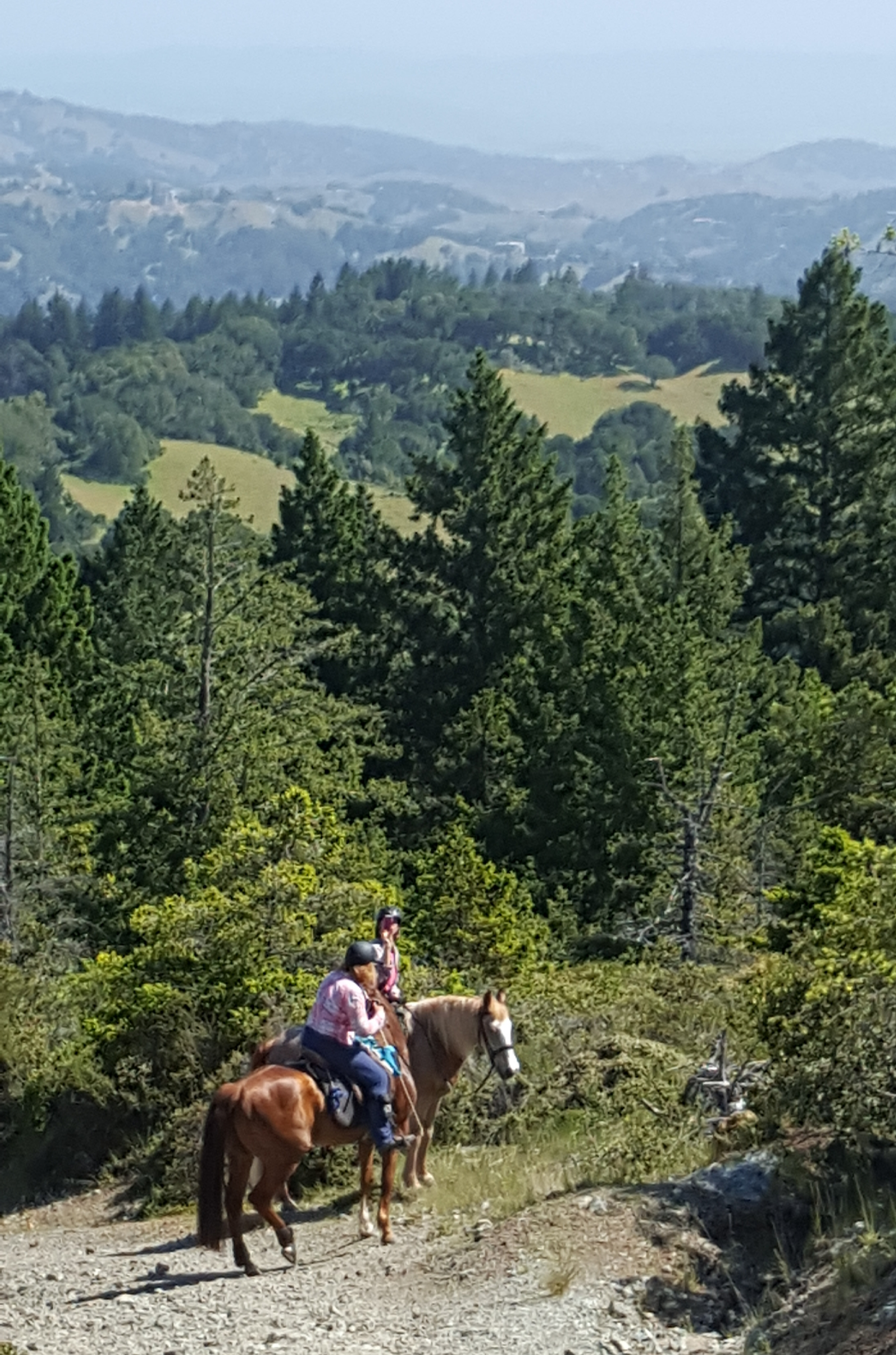 Bon Tempe & Lake Lagunitas Spring Ride