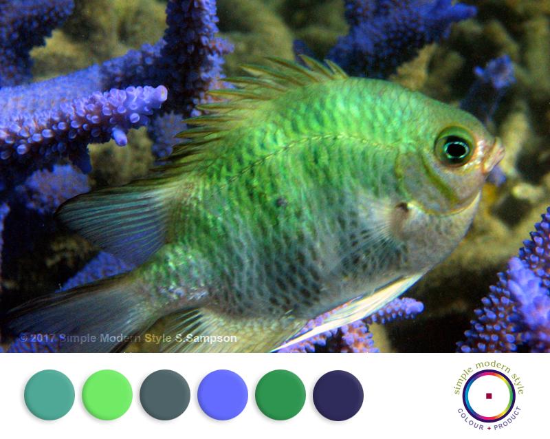 SMS Colorway Post w45-17.jpg