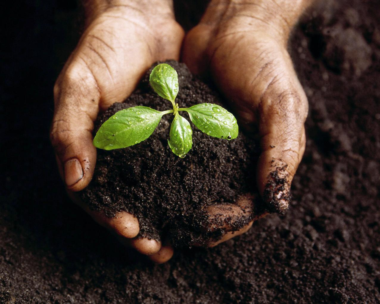 Planting-is-Good-for-You.jpg