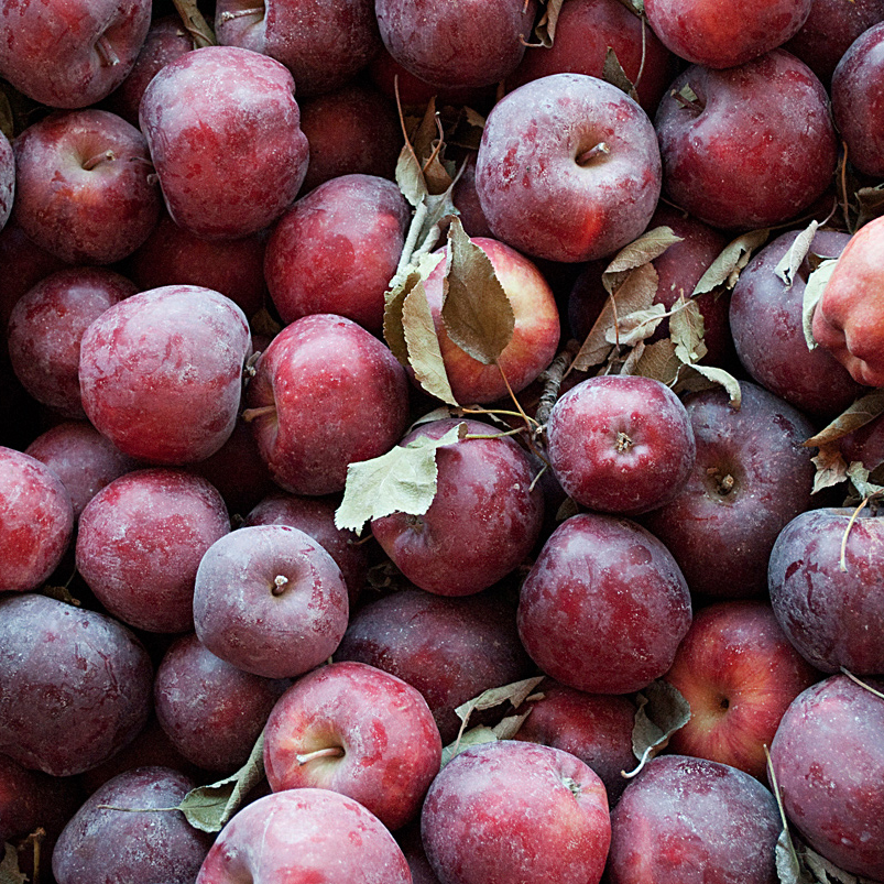 IDAHO_Apples_cropped.jpg