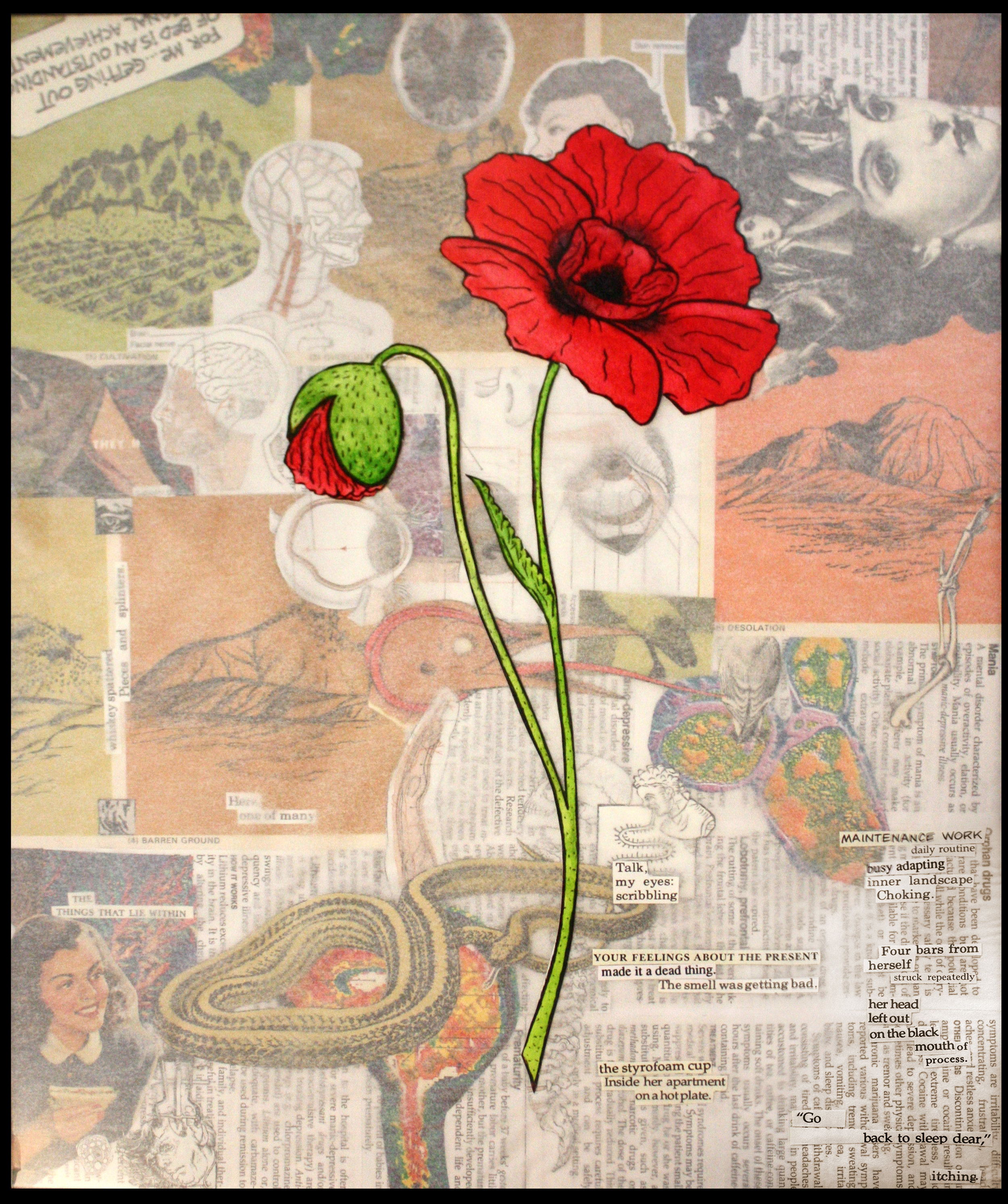 Kellie Hayden - Notes on Coping: Opium Poppy