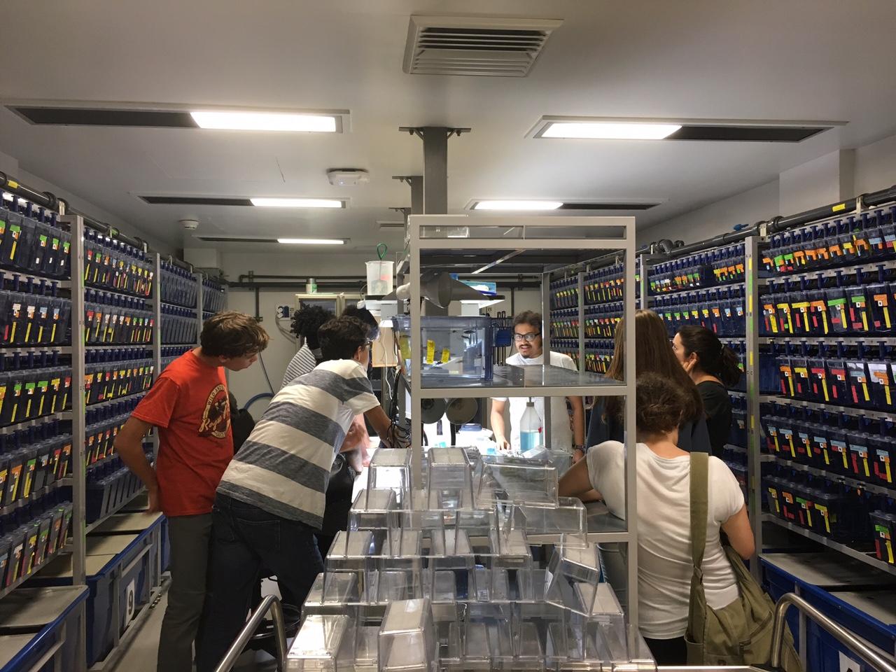 Zebra fish lab
