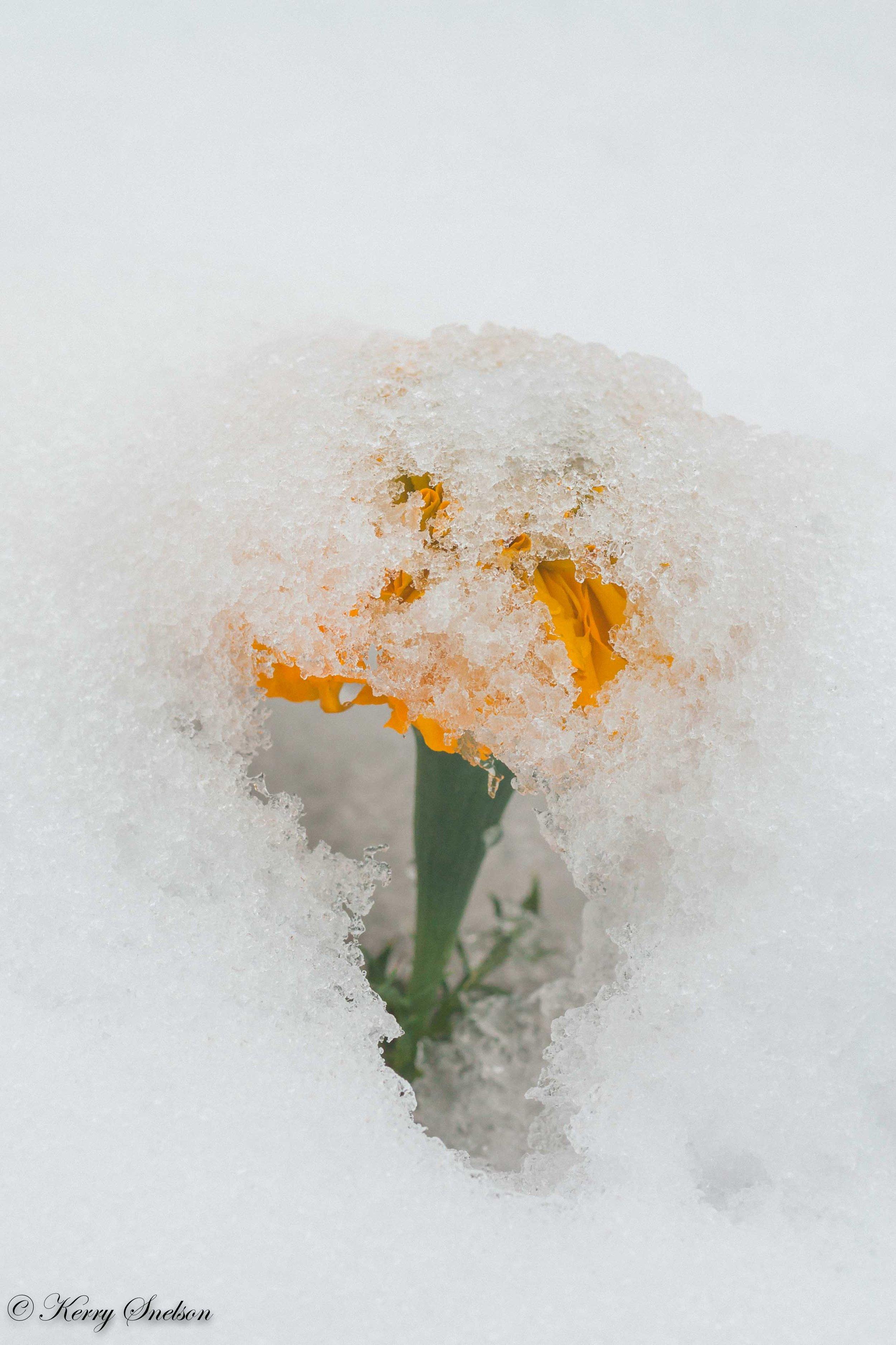 Snow Umbrella