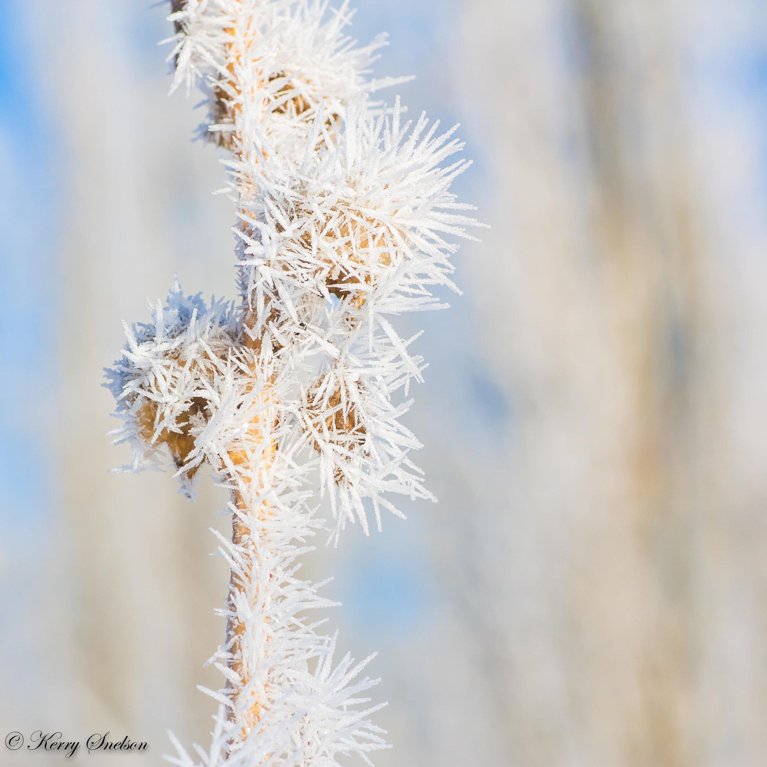 Winter Hoar Frost Macro