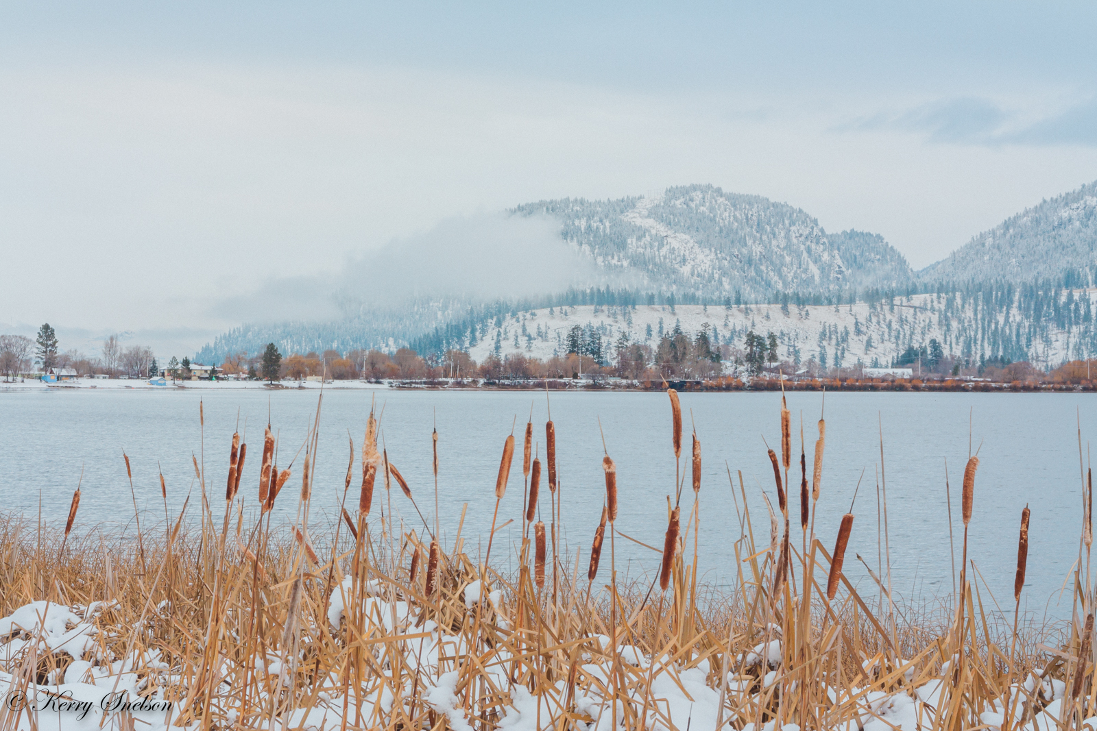 Reeds by Wood Lake in Winter