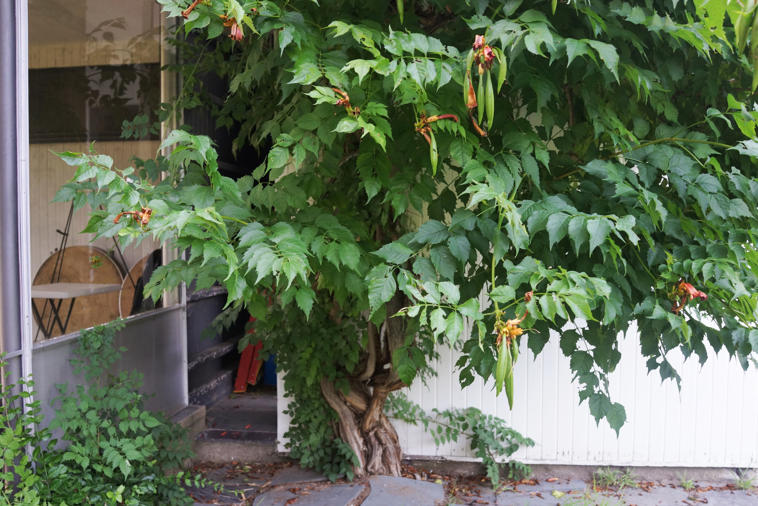 It is always nice to see how plants adapts around an older home.