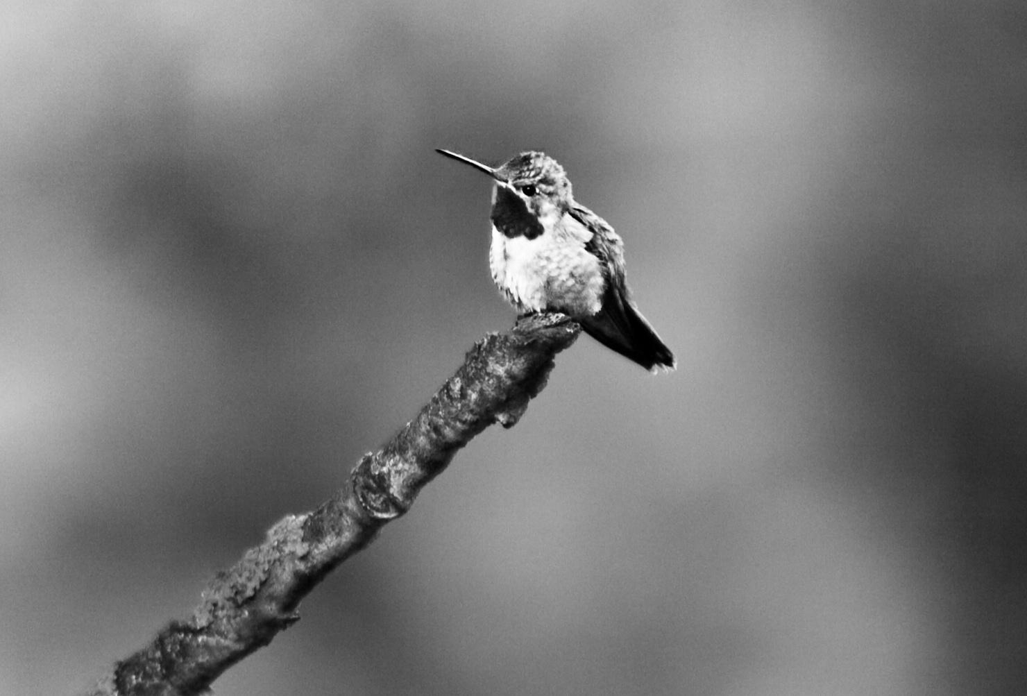 cabin Humming bird_Snapseed.jpg