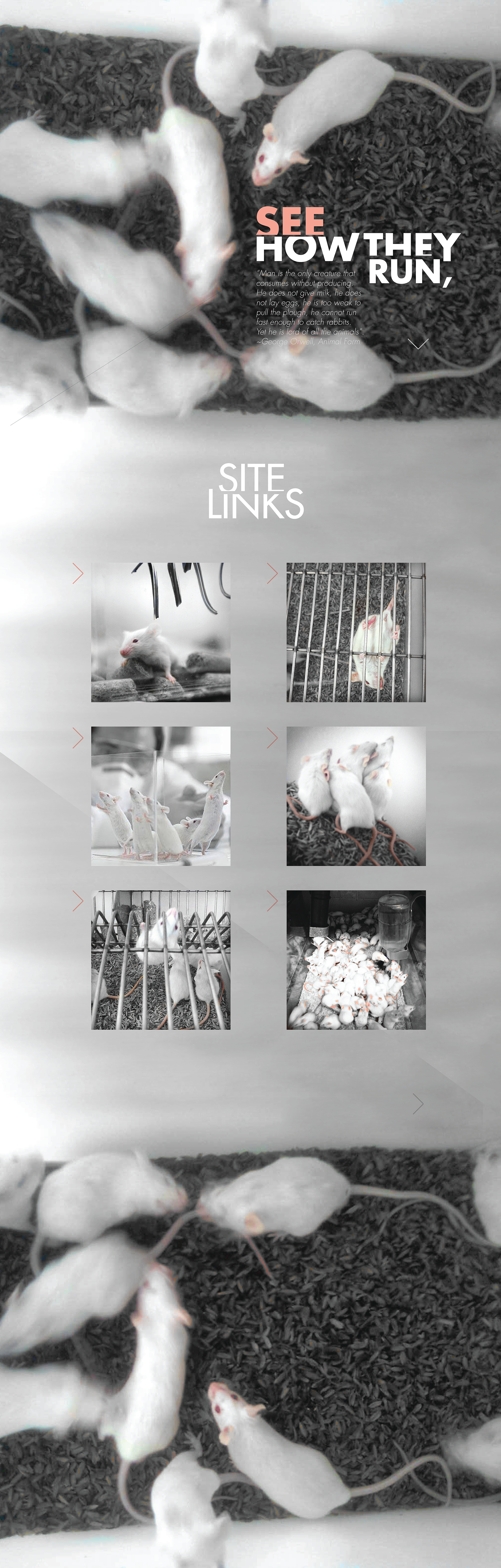 3 Blind Mice - Squarespace_Covers-11.png