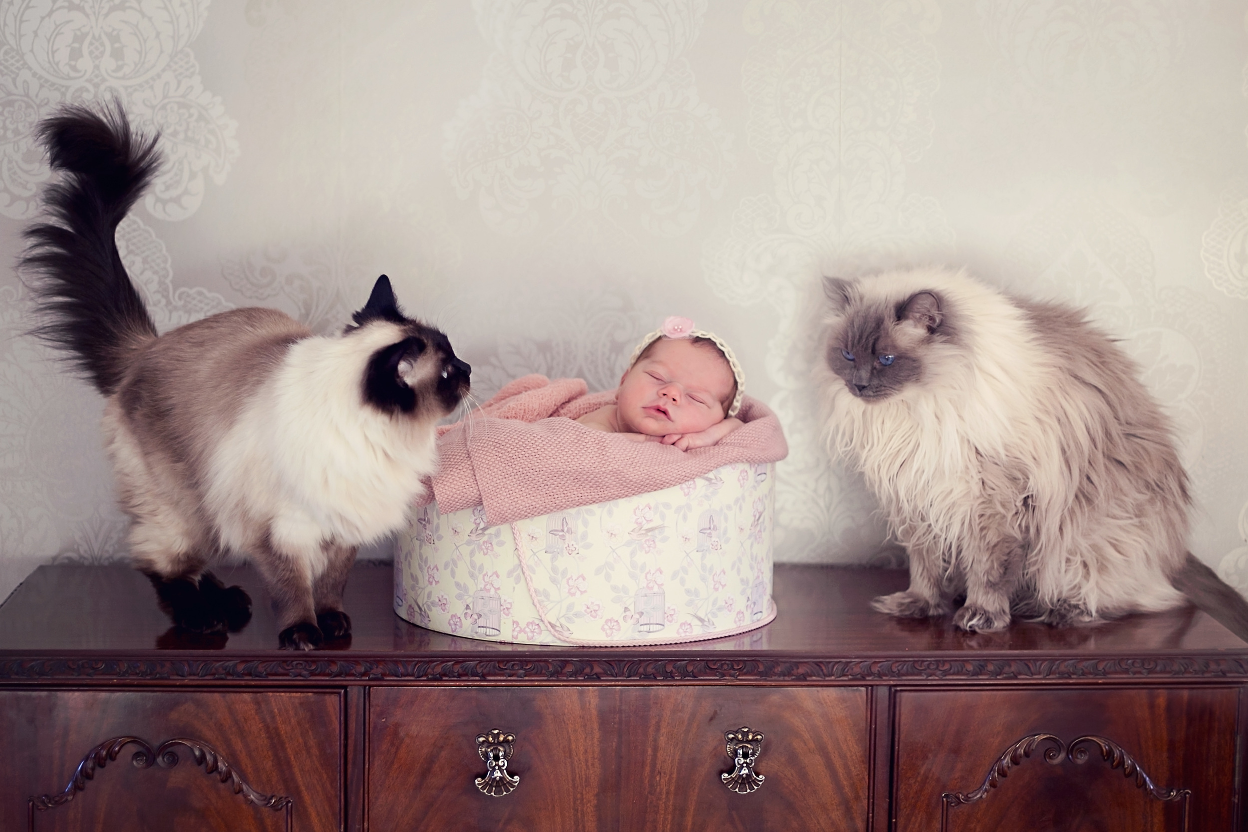newborn baby girl and two cats