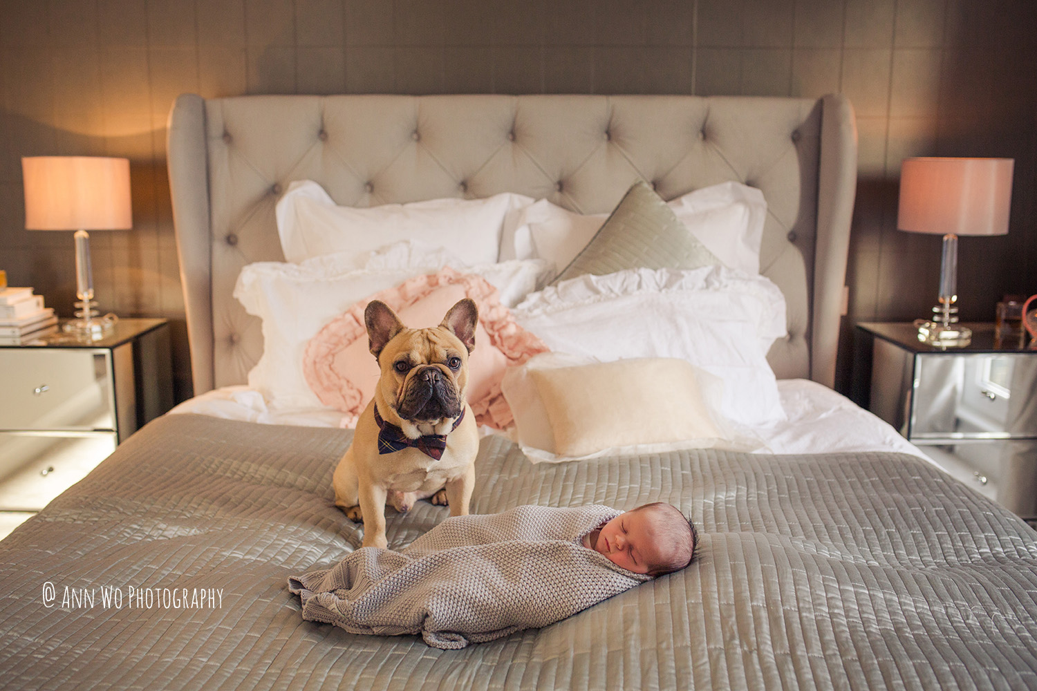 newborn baby and a bulldog by Ann Wo Photography North