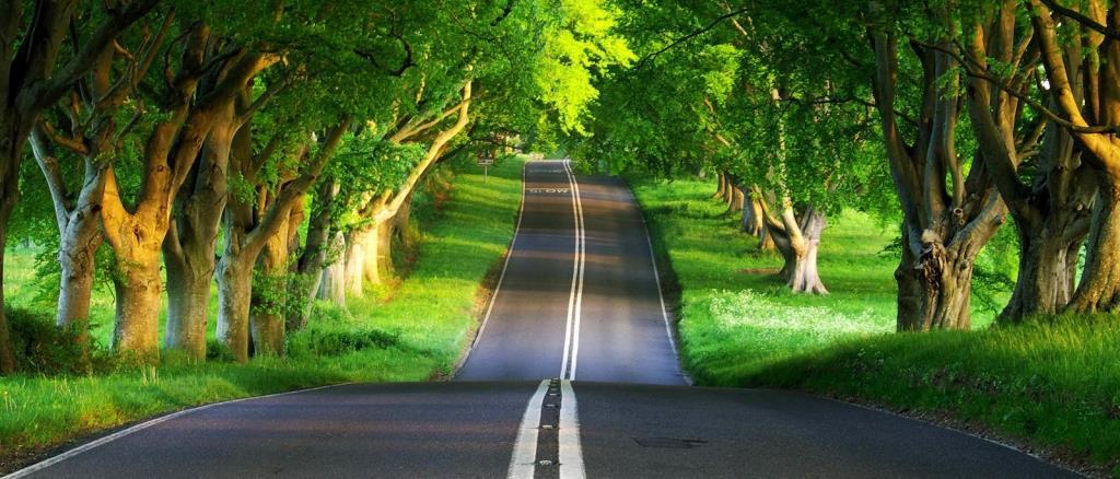 green-road-1024x768-wallpaper-3774.jpg