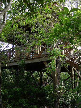 Treehouse. 12 feet above the ground!