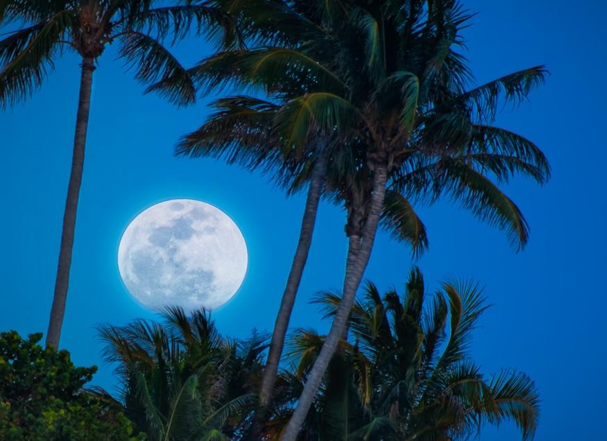 Super Moon and palmtree.jpg