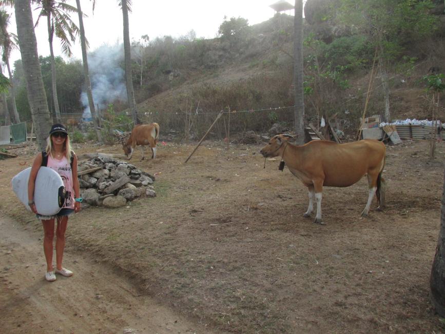 BALI-COWS-SURF-MINDSEYE.png