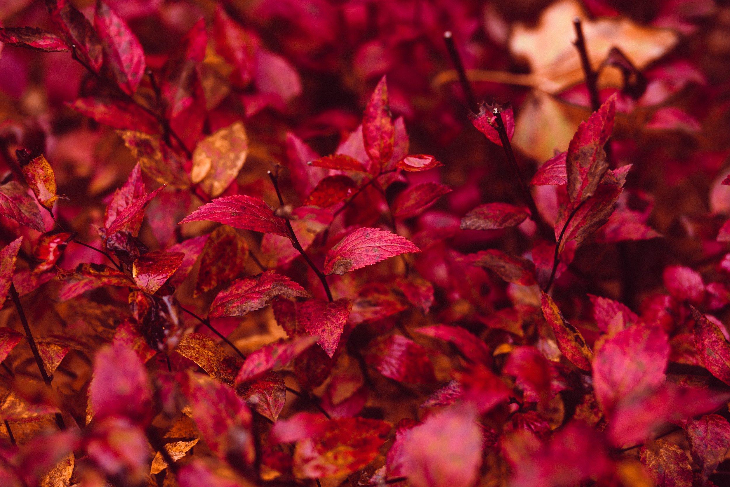 abstract-autumn-autumn-leaves-218678.jpg